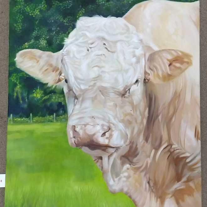 Graham Davis 'Bull'